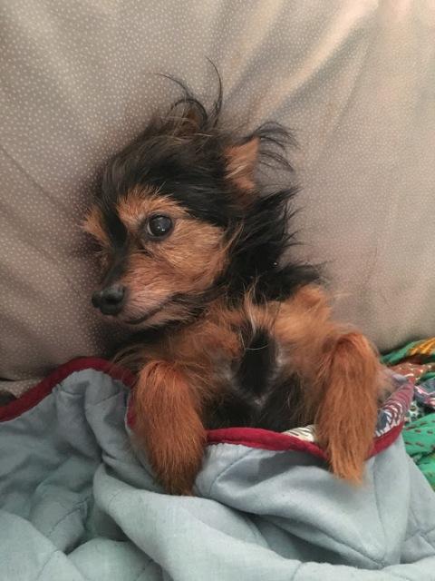 cute-in-bed