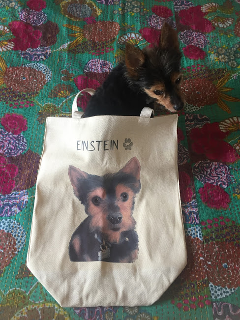 einstein-bag-1