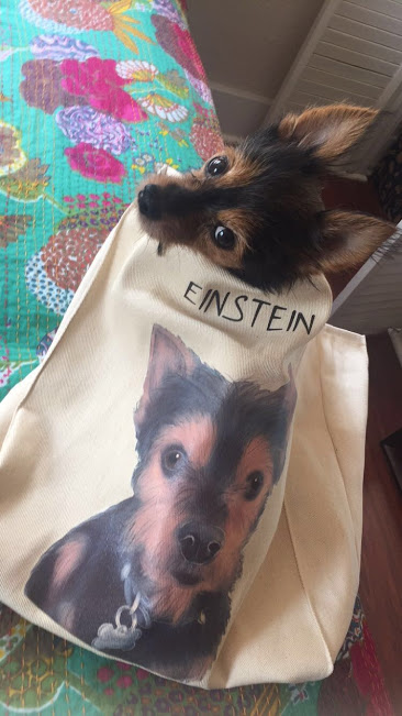 einstein-bag