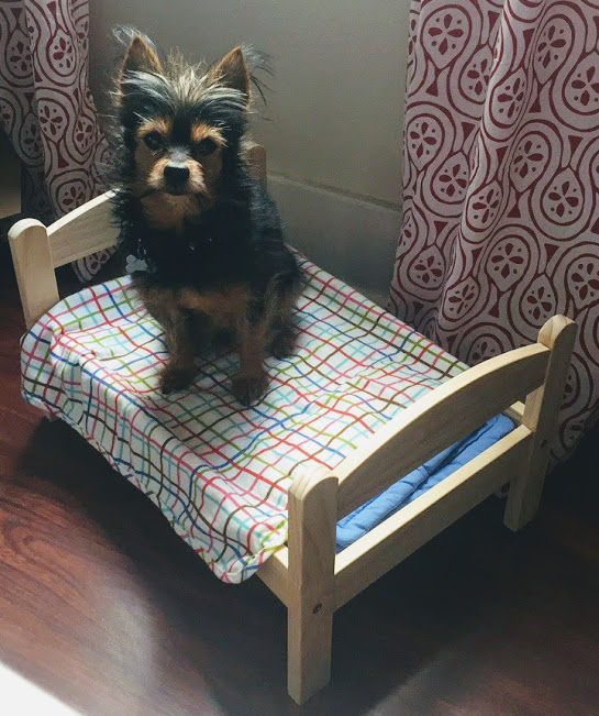 in-a-dog-bed