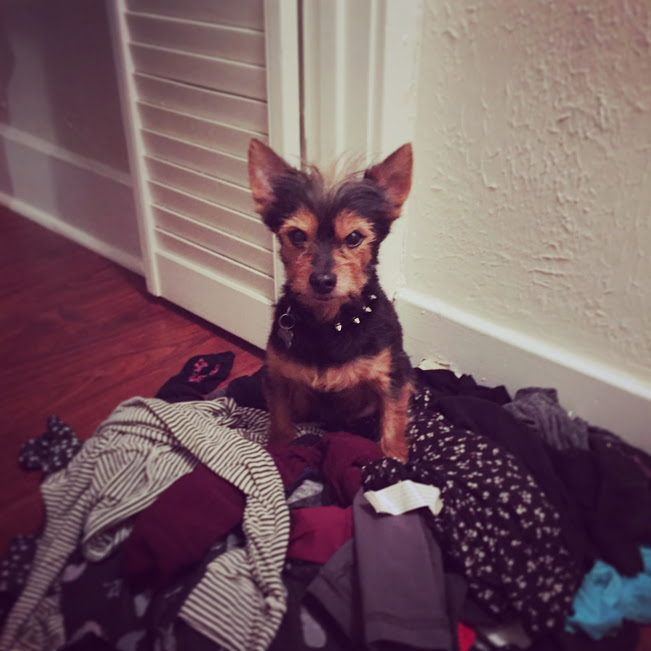 on-a-pile-of-dirty-clothes