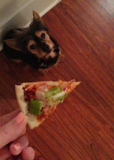 tiny-pizza